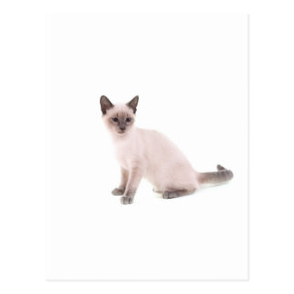 kitten postcards
