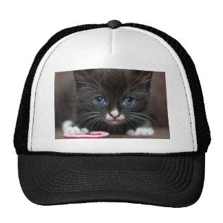 Kitten Power Hats