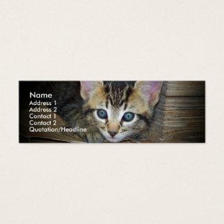 Kitten Profile Card