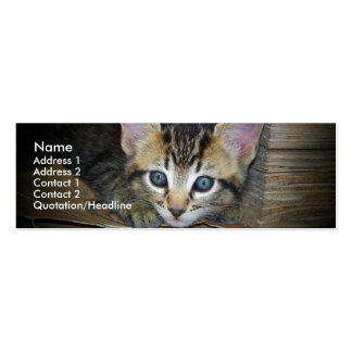 Kitten Profile Card Pack Of Skinny Business Cards