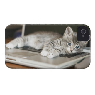Kitten resting on laptop computer iPhone 4 covers