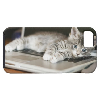 Kitten resting on laptop computer iPhone 5 cases