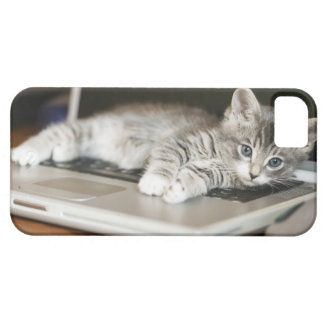 Kitten resting on laptop computer iPhone 5 covers