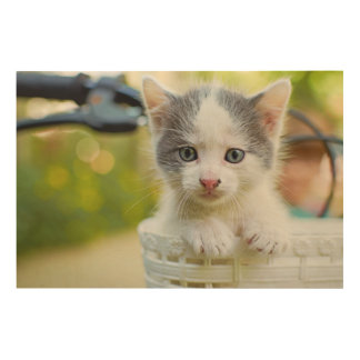 Kitten Rides A Bike Wood Print