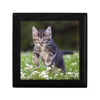 Kitten Running Through Clover Gift Box
