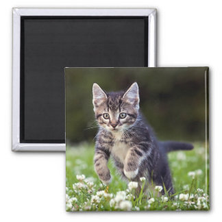 Kitten Running Through Clover Magnet