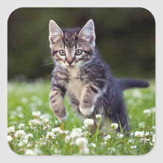 Kitten Running Through Clover Square Sticker