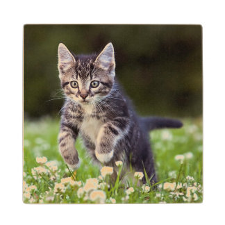 Kitten Running Through Clover Wood Coaster