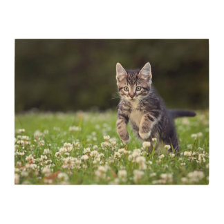 Kitten Running Through Clover Wood Wall Art