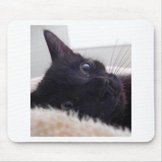 Kitten s Cute Face Mousepads