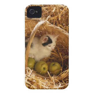Kitten sitting in basket with fruits, elevated iPhone 4 case