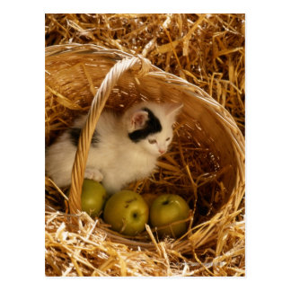 Kitten sitting in basket with fruits, elevated postcard