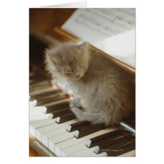 Kitten sitting on piano keyboard, close-up card