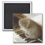 Kitten sitting on piano keyboard, close-up square magnet