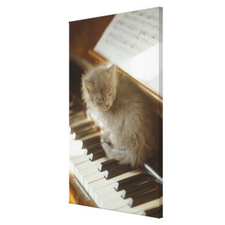 Kitten sitting on piano keyboard, close-up stretched canvas prints