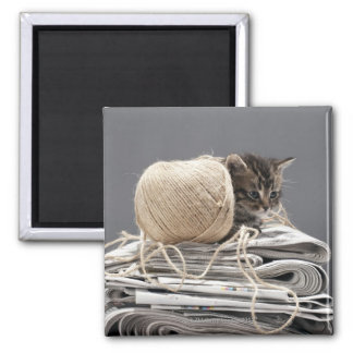 Kitten sitting on pile of newspapers square magnet
