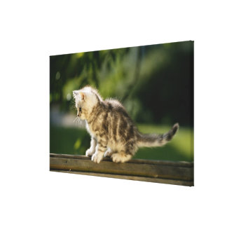 Kitten sitting on top of bench, side view canvas print