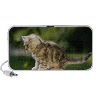 Kitten sitting on top of bench, side view laptop speakers