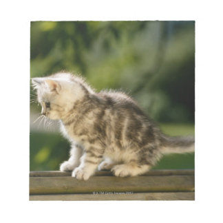 Kitten sitting on top of bench, side view notepad