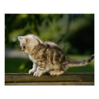 Kitten sitting on top of bench, side view poster