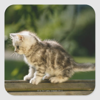Kitten sitting on top of bench, side view square sticker