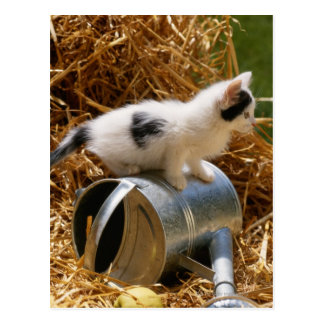Kitten sitting on top of watering can postcard