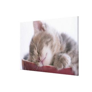 Kitten Sleeping in Bowl 2 Canvas Print