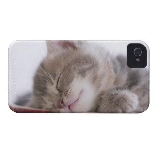 Kitten Sleeping in Bowl 2 iPhone 4 Case-Mate Case