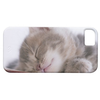 Kitten Sleeping in Bowl 2 iPhone 5 Cover