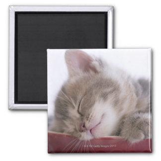 Kitten Sleeping in Bowl 2 Magnet