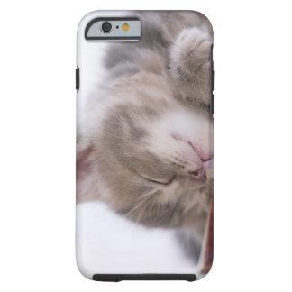 Kitten Sleeping in Bowl 2 Tough iPhone 6 Case