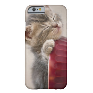 Kitten Sleeping in Bowl Barely There iPhone 6 Case