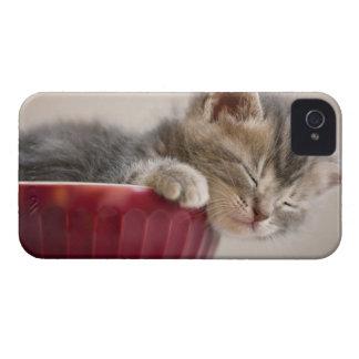 Kitten Sleeping in Bowl iPhone 4 Case