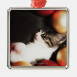 Kitten sleeping in decorations christmas ornaments