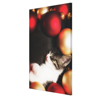 Kitten sleeping in decorations stretched canvas print