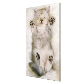 Kitten Sleeping on a White Fluffy Carpet, High Canvas Print