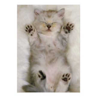 Kitten Sleeping on a White Fluffy Carpet, High Poster