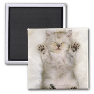 Kitten Sleeping on a White Fluffy Carpet, High Square Magnet