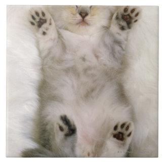 Kitten Sleeping on a White Fluffy Carpet, High Tile