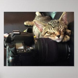 Kitten Sleeping on Camera. Poster