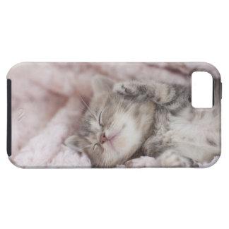 Kitten Sleeping on Towel iPhone 5 Case