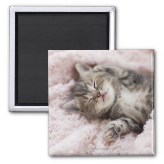 Kitten Sleeping on Towel Magnet
