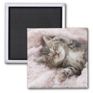 Kitten Sleeping on Towel Square Magnet