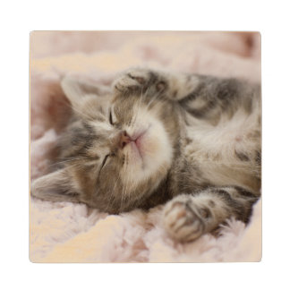 Kitten Sleeping On Towel Wood Coaster