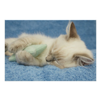 kitten sleeping with toy poster