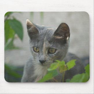 Kitten Spy Mouse Pad