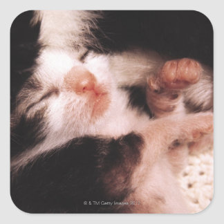 kitten square sticker