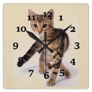 Kitten Square Wall Clock