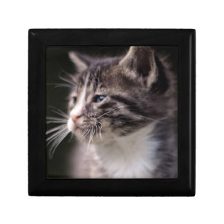 Kitten standing and squinting gift box