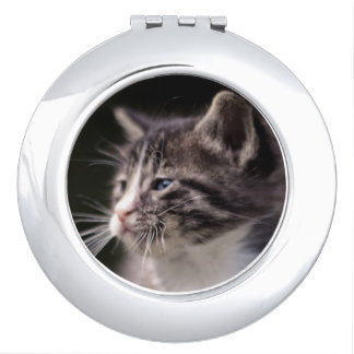 Kitten standing and squinting mirror for makeup